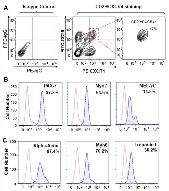 CD184 (CXCR4) Antibody