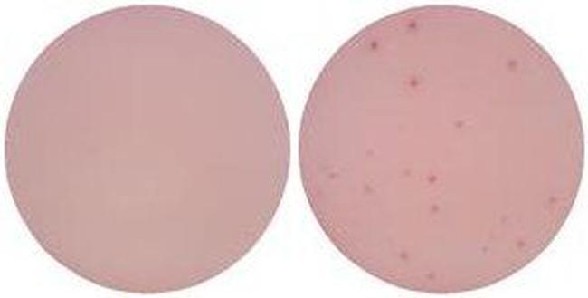 IL-13 Antibody in ELISA (ELISA)