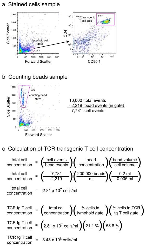 CD90.2 (Thy-1.2) Antibody