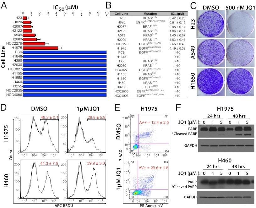 CD201 (EPCR) Antibody