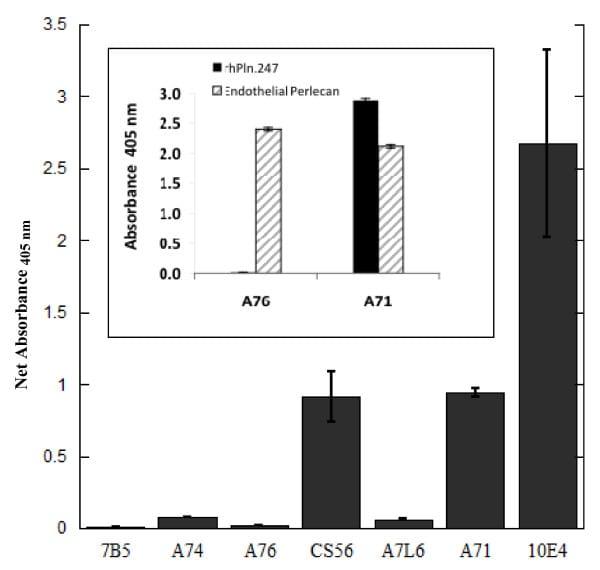 Perlecan Antibody in ELISA (ELISA)