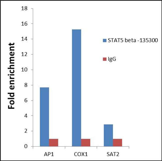 STAT5 beta Antibody in Relative expression