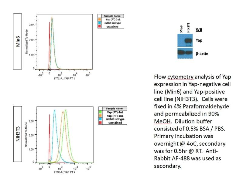 YAP1 Antibody in Flow Cytometry (Flow)
