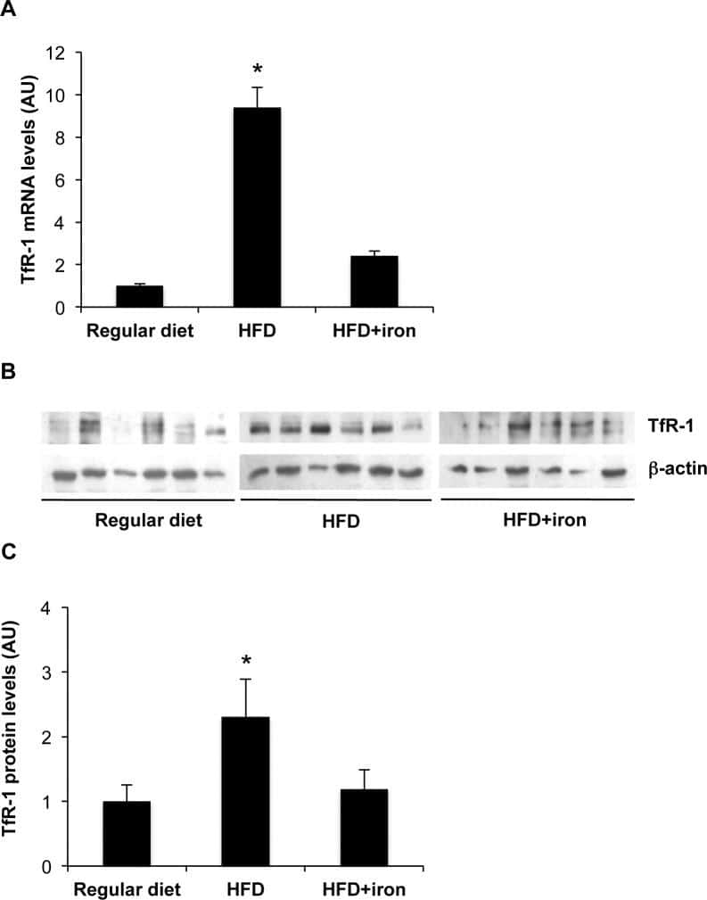 Transferrin Receptor Antibody Monoclonal H684 1999 70 Hp Evinrude Wiring Diagram Plos One