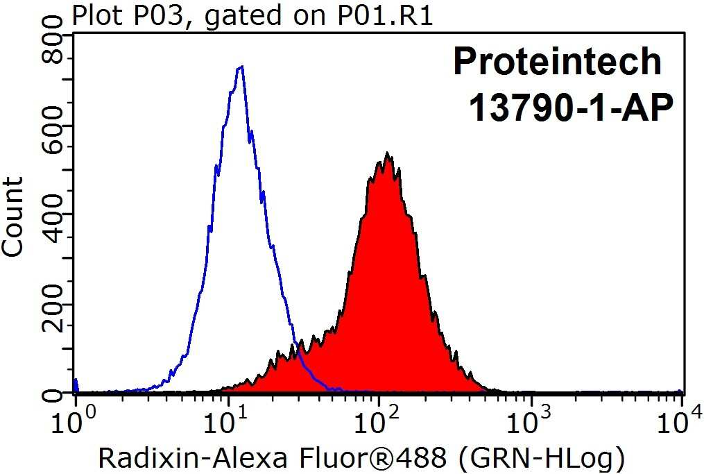Radixin Antibody in Flow Cytometry (Flow)