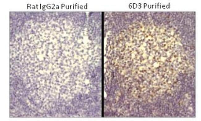 Rat IgG2a kappa Isotype Control in Immunohistochemistry (Paraffin) (IHC (P))