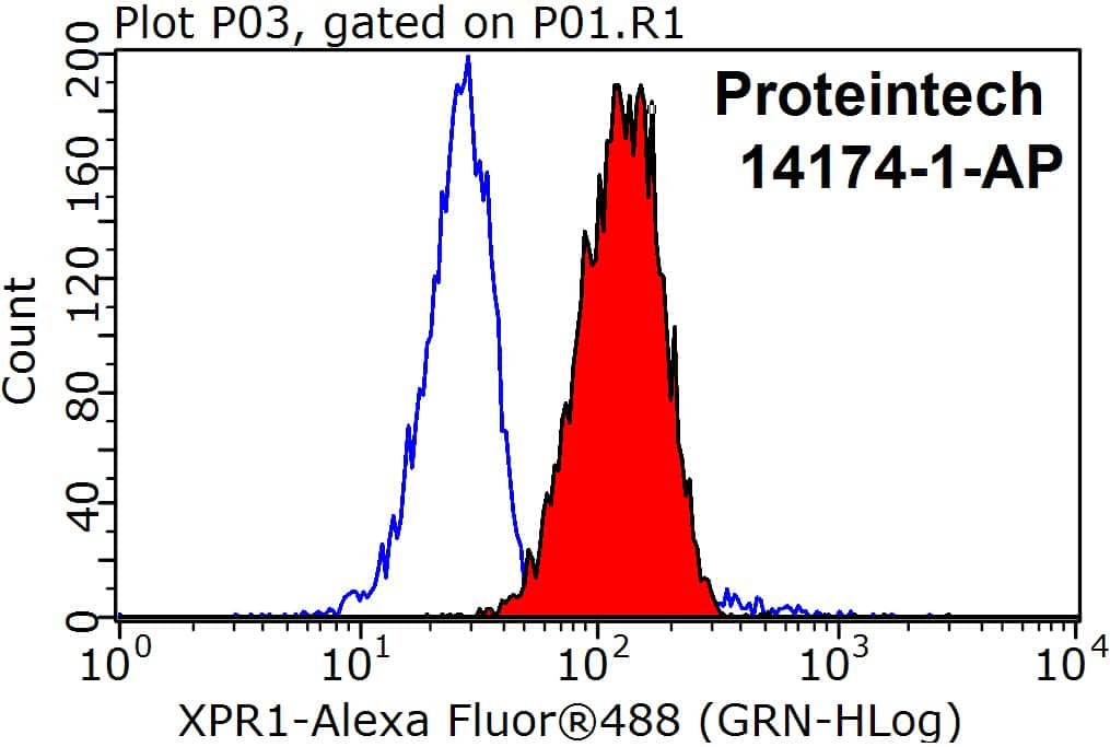 XPR1 Antibody in Flow Cytometry (Flow)