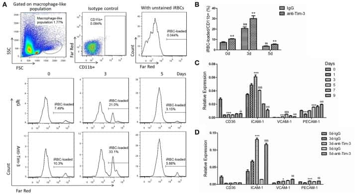 CD366 (TIM3) Antibody