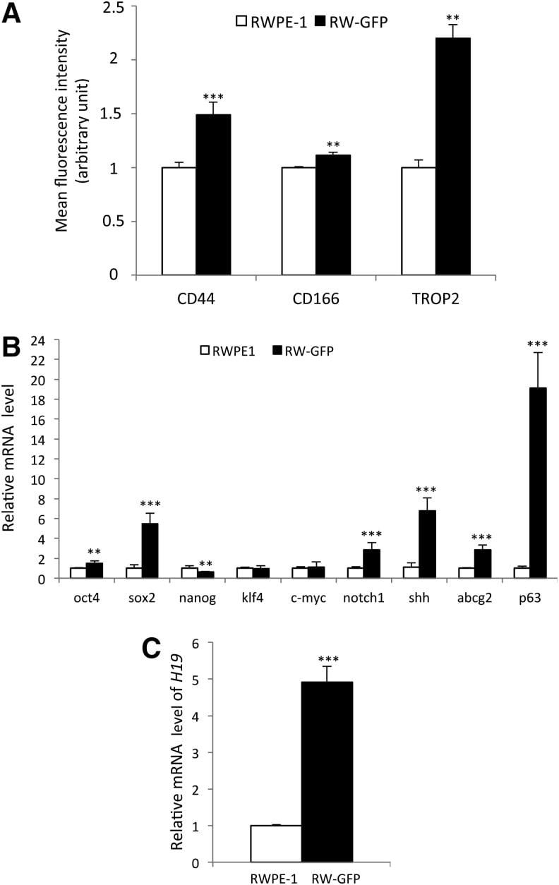 Trop2 (EGP-1) Antibody