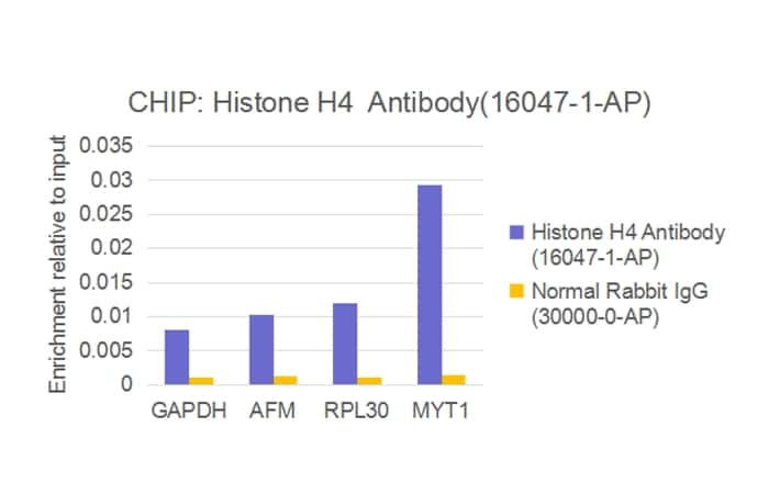 Histone H4 Antibody in ChIP assay (ChIP)