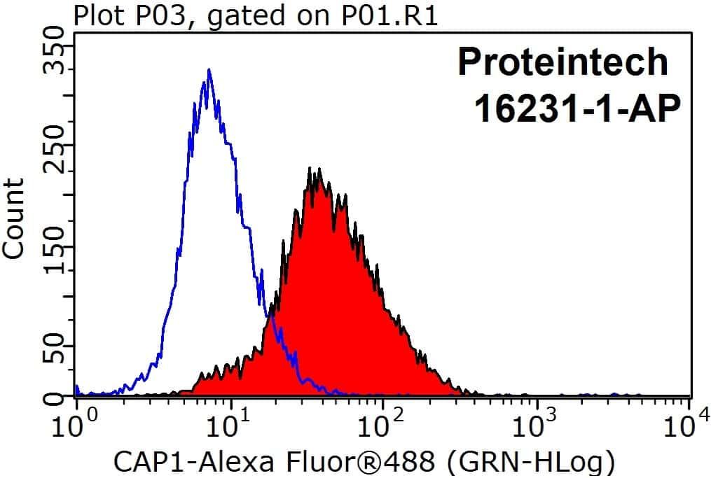 CAP1 Antibody in Flow Cytometry (Flow)