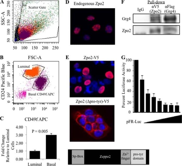 CD49f (Integrin alpha 6) Antibody