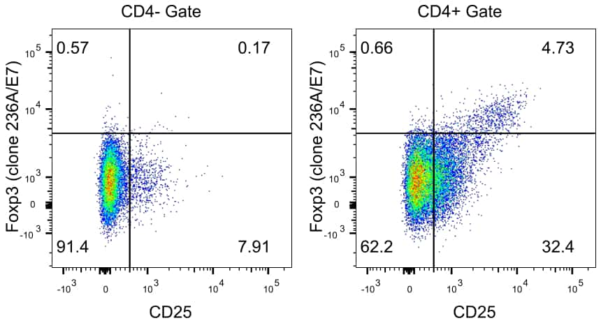 FOXP3 Antibody in Relative expression
