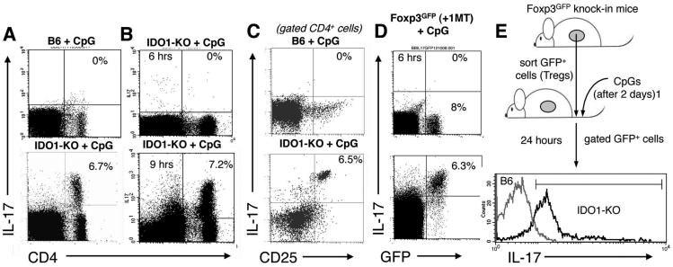 Cpg Ox40 Clinical Trial