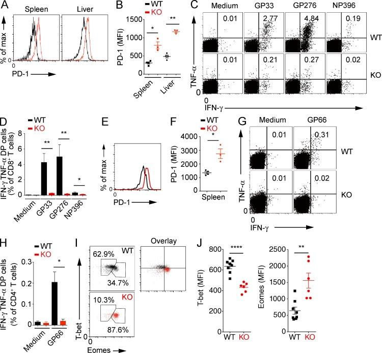 TNF alpha Antibody