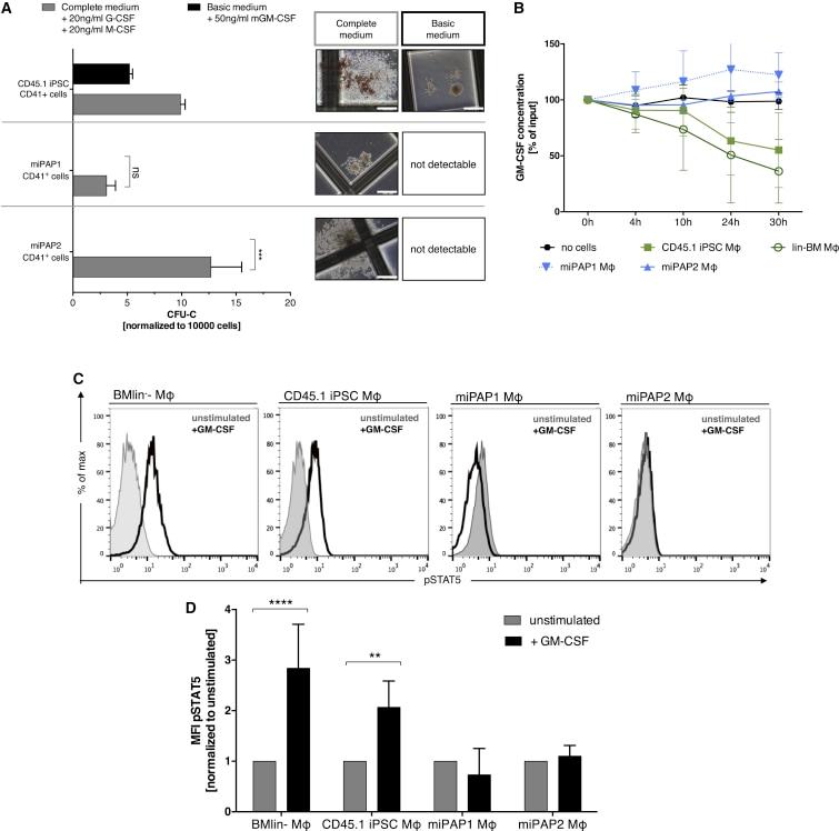 Phospho-STAT5 (Tyr694) Antibody