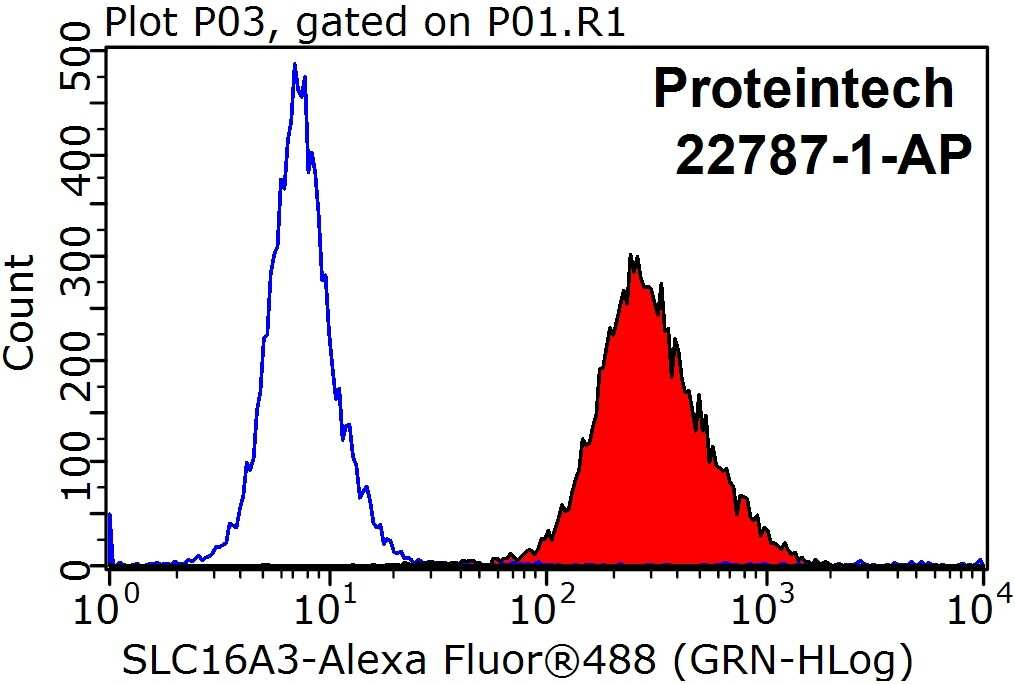 MCT4 Antibody in Flow Cytometry (Flow)
