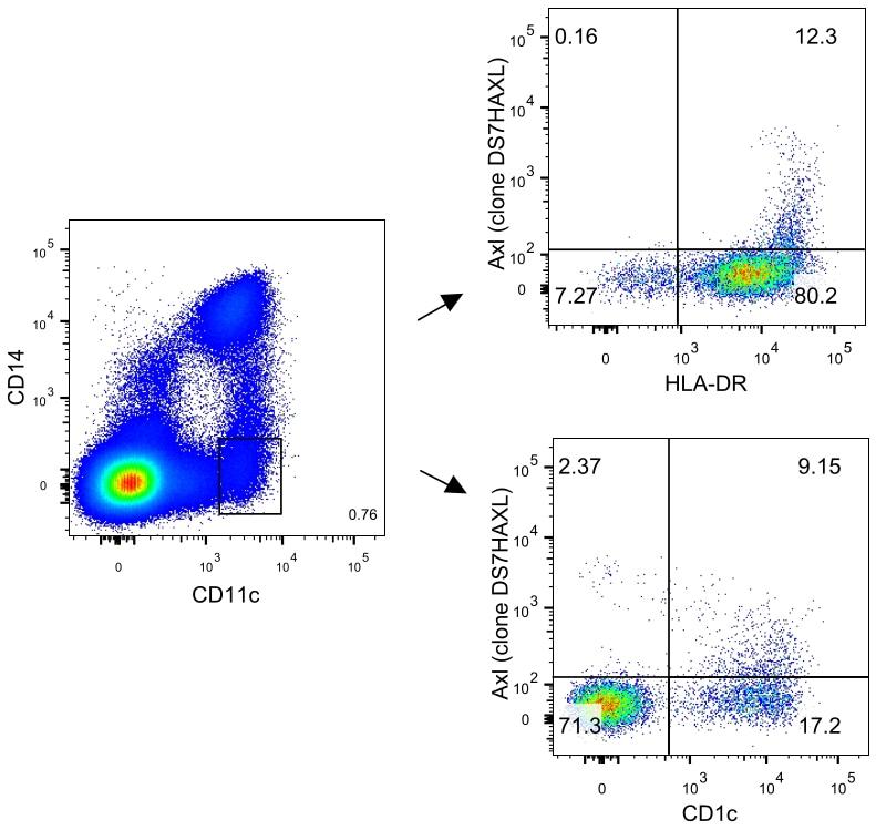 Axl Antibody in Relative expression
