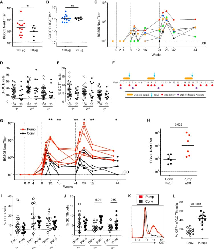 CD185 (CXCR5) Antibody