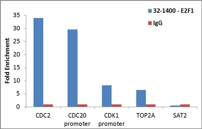 E2F1 Antibody in ChIP assay (ChIP)