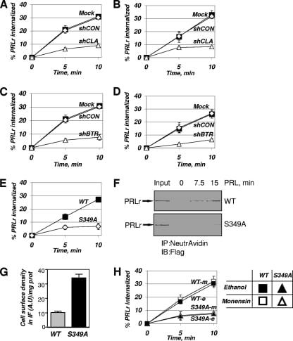 Prolactin Receptor Antibody