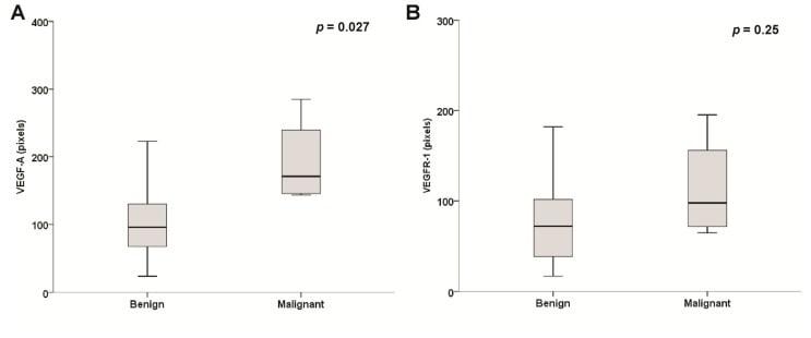 VEGF Receptor 1 (soluble) Antibody