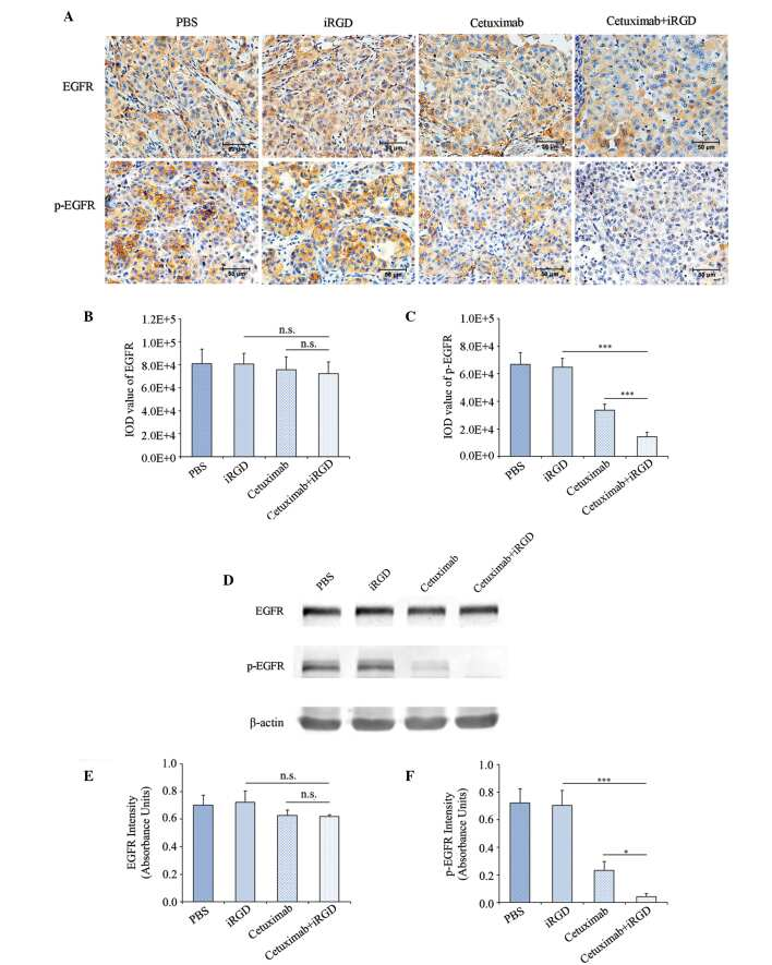 Phospho-EGFR (Tyr1086) Antibody