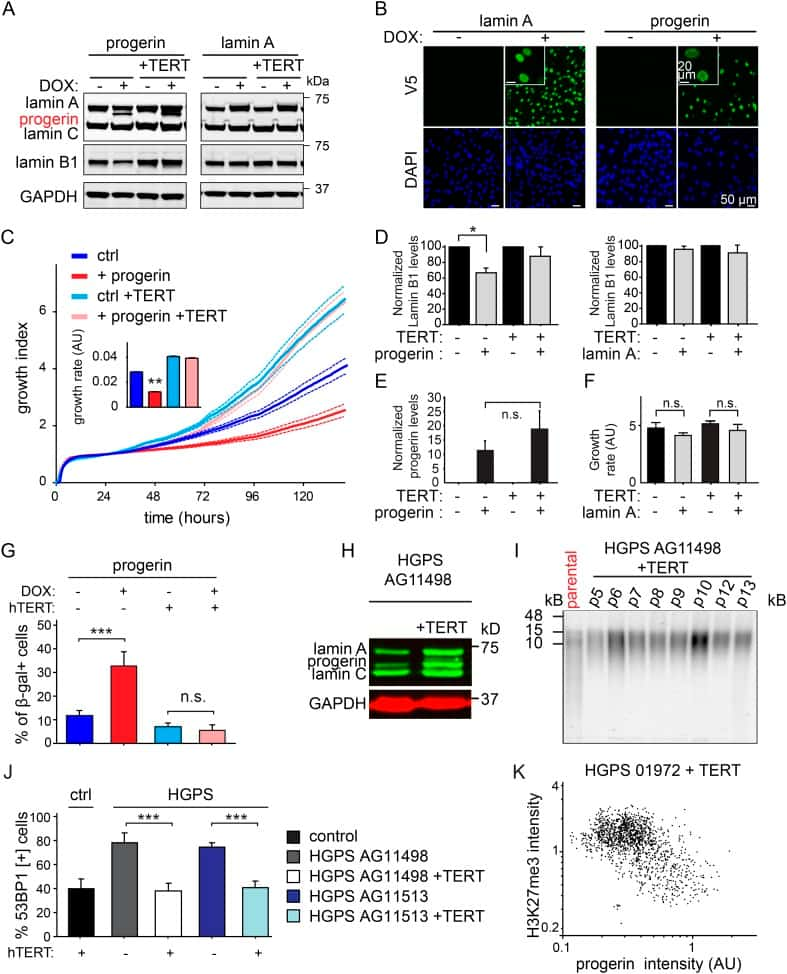 V5 Tag Antibody Alexa Fluor 174 488 Monoclonal 2f11f7