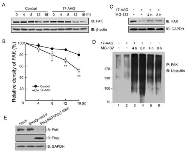 HSP90 beta Antibody