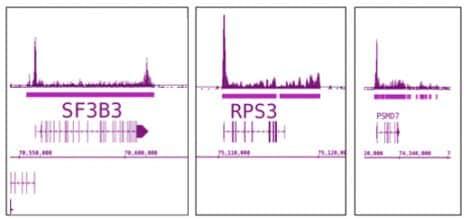 RNA pol II Antibody in ChIP-sequencing (ChIP-Seq)