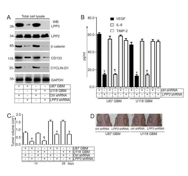 PPAP2B Antibody