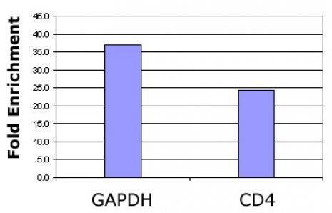 Histone H2BK120ac Antibody in ChIP assay (ChIP)