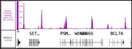 Histone H3K4me3 Antibody in ChIP-sequencing (ChIP-Seq)