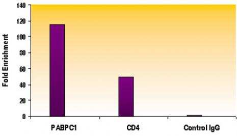 Histone H4ac (pan-acetyl) Antibody in ChIP assay (ChIP)