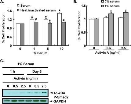 Phospho-SMAD2 (Ser465, Ser467) Antibody