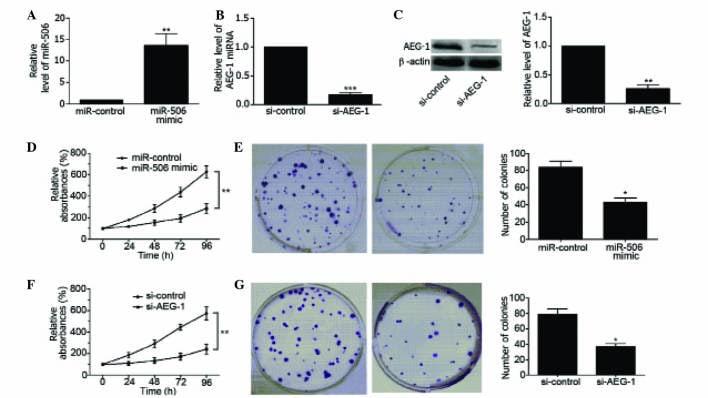 Metadherin Antibody in Western Blot (WB)