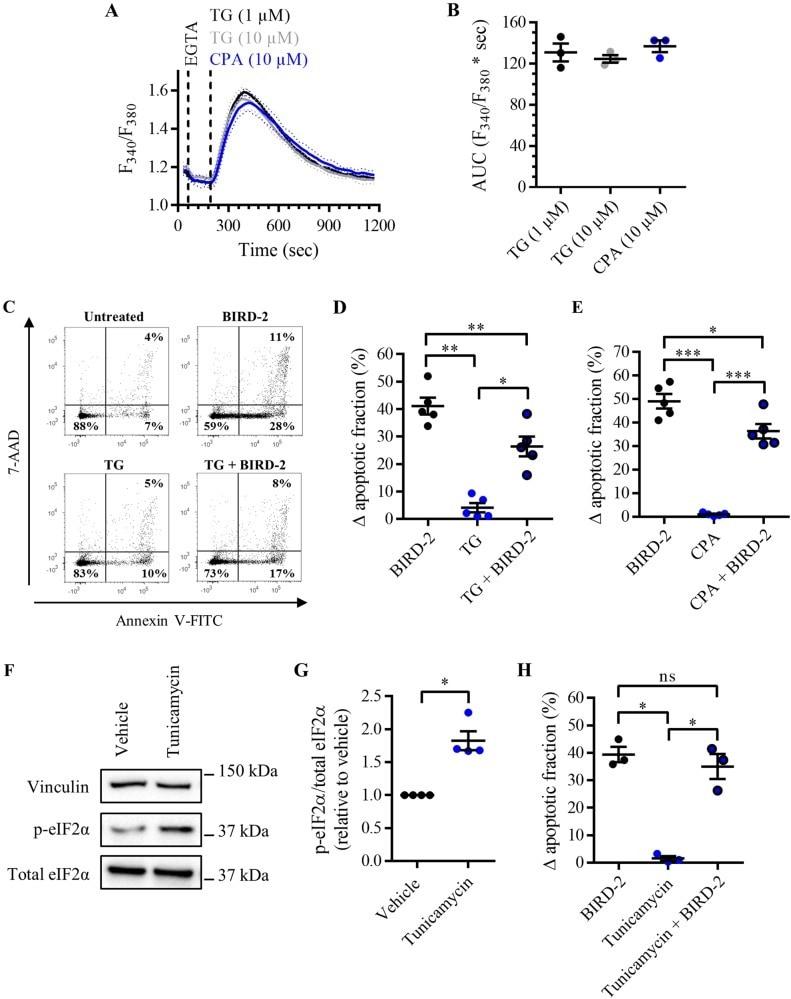 Phospho-eIF2a (Ser51) Antibody