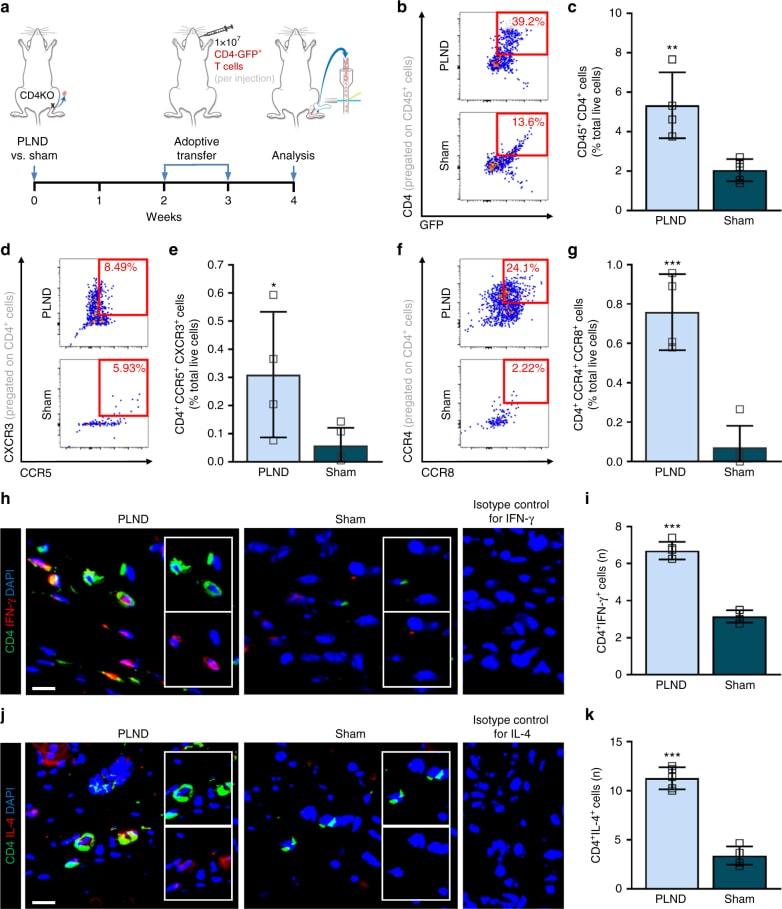 CD183 (CXCR3) Antibody