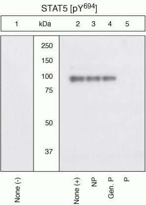 Phospho-STAT5 alpha (Tyr694) Antibody in Cell Treatment (TM)