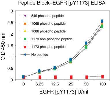 Phospho-EGFR (Tyr1173) Antibody in Peptide Array