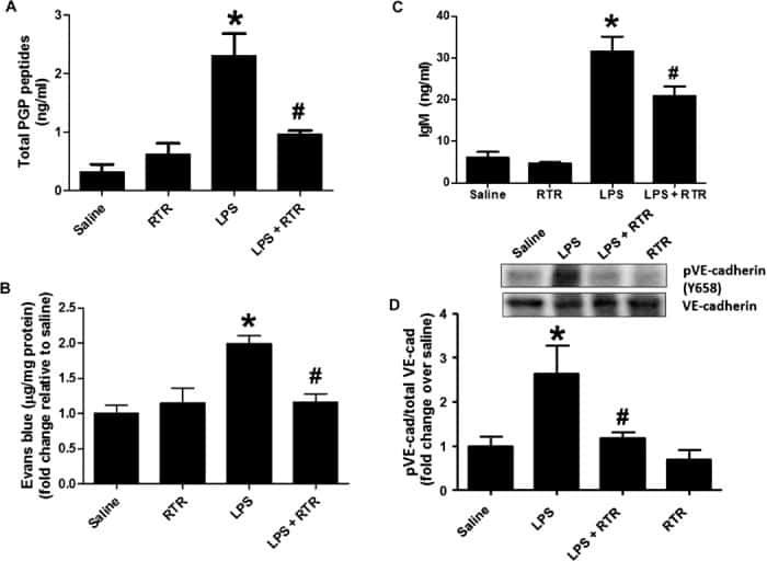 Phospho-VE-cadherin (Tyr658) Antibody
