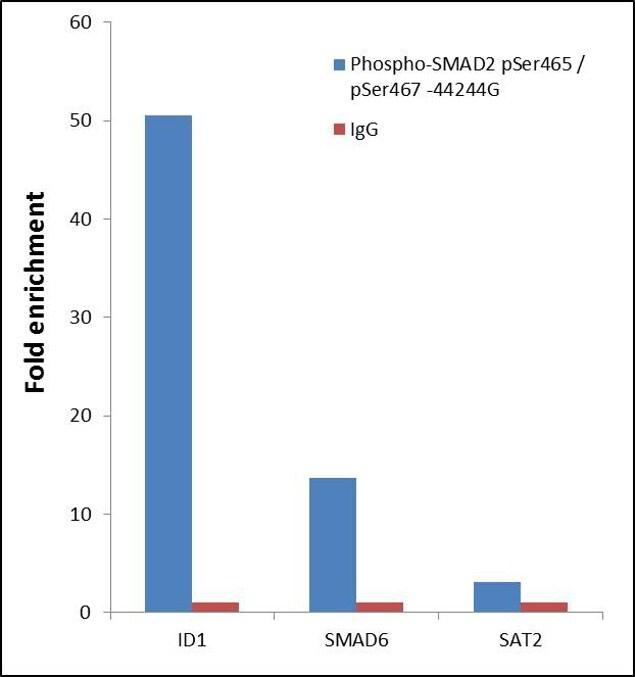 Phospho-SMAD2 (Ser465, Ser467) Antibody in ChIP assay (ChIP)