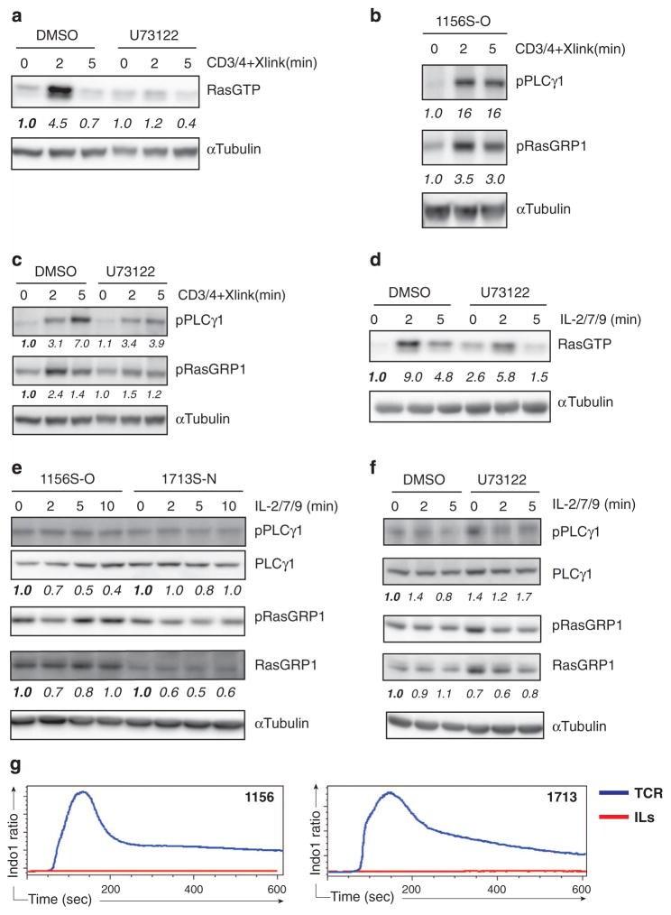 Phospho-PLCG1 (Tyr783) Antibody