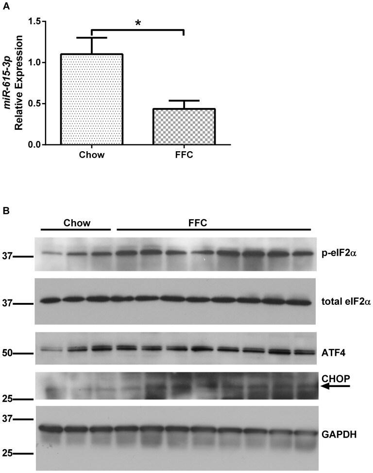 Phospho-eIF2a (Ser52) Antibody
