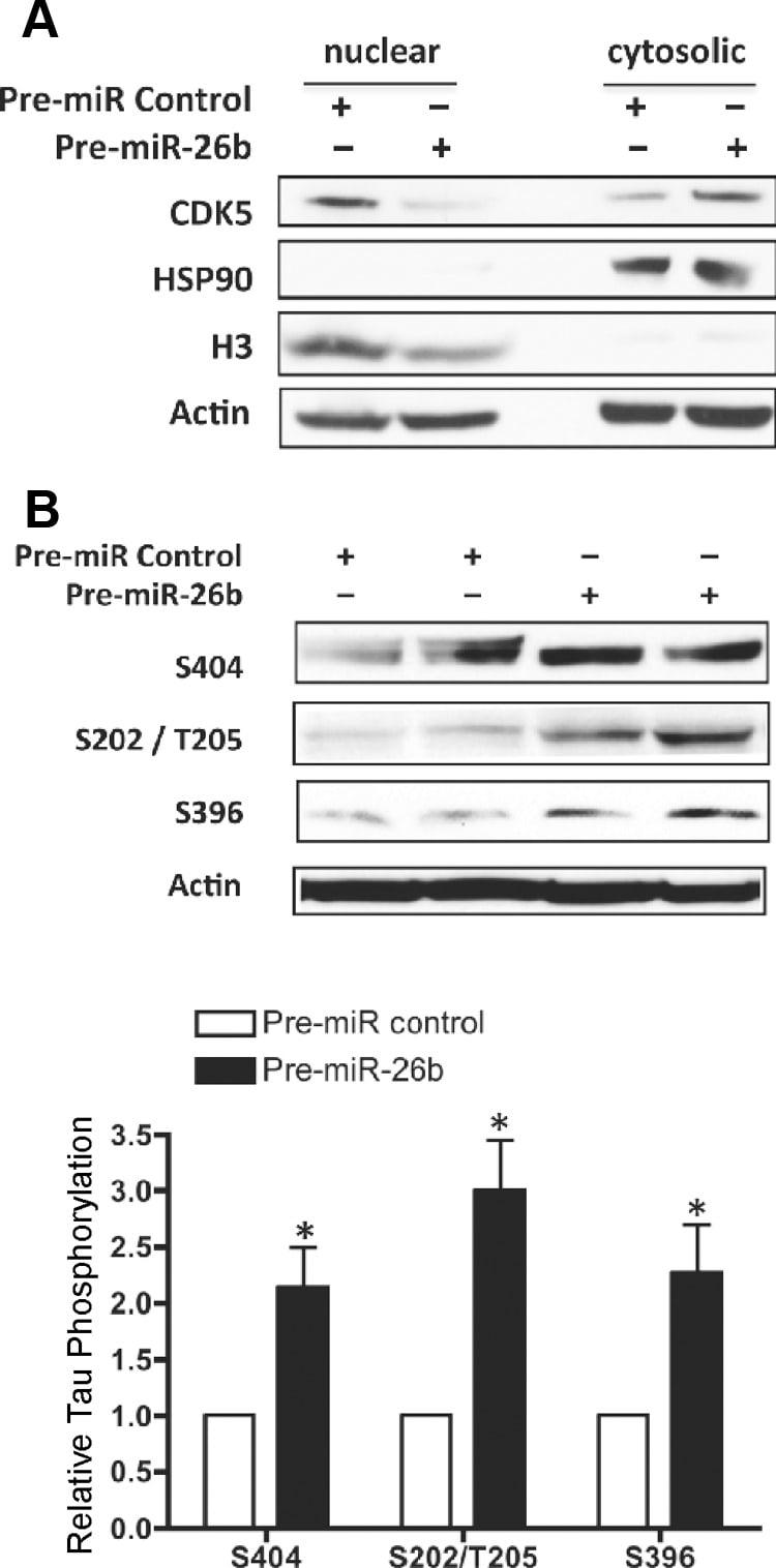 Phospho-Tau (Ser404) Antibody