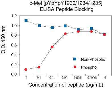 Phospho-c-Met (Tyr1230, Tyr1234, Tyr1235) Antibody in peptide-ELISA (pep-ELISA)