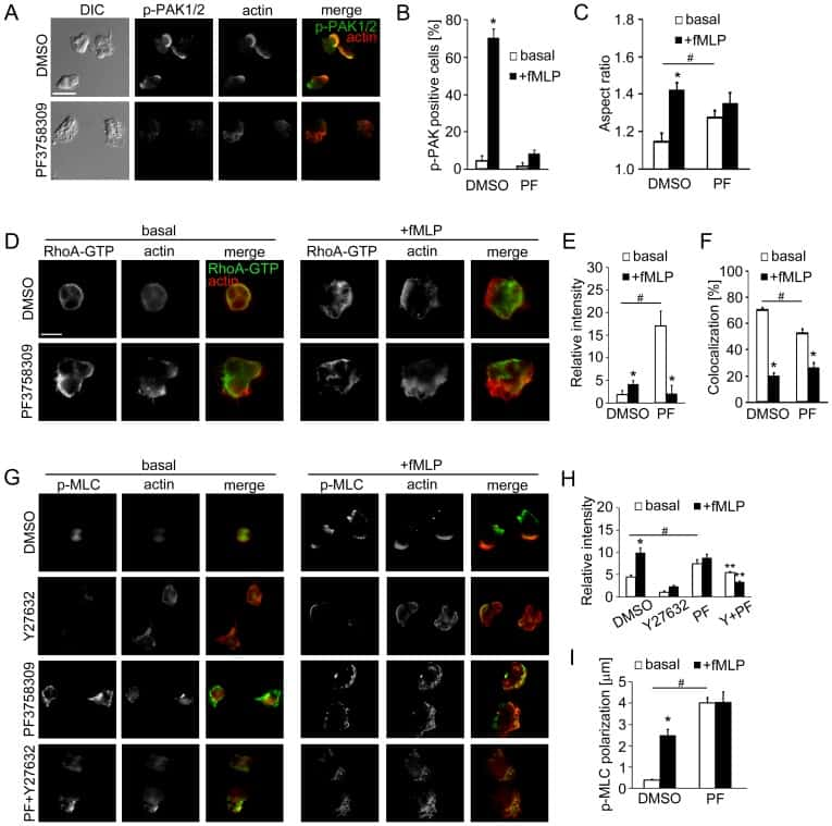 Phospho-PAK1/2/3 (Thr423) Antibody