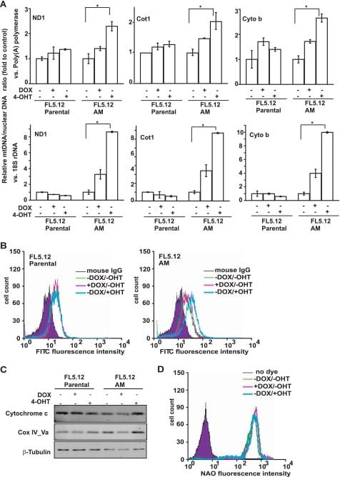 COX5A Antibody