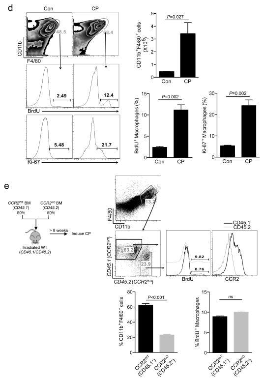 CD45.1 Antibody