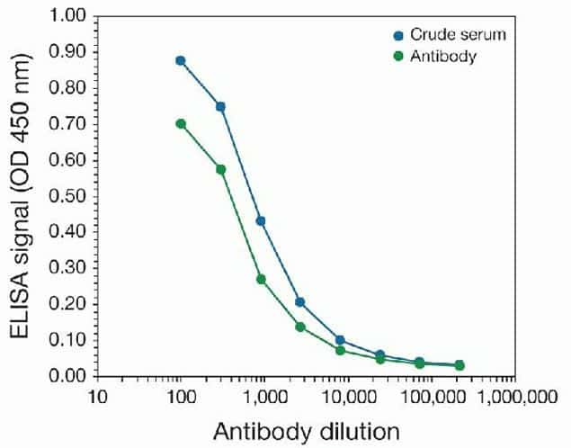 DNMT3B Antibody in peptide-ELISA (pep-ELISA)